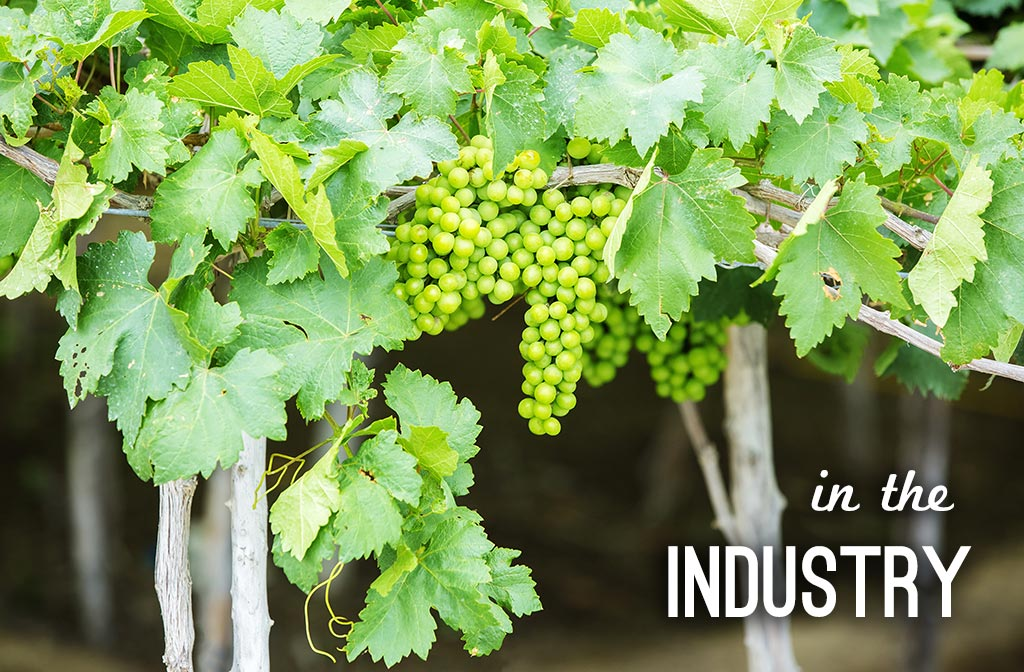 Organic, Sustainable and Biodynamic, the Future of the Wine Industry?